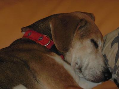 dog++family+031_convert_20110528150637.jpg