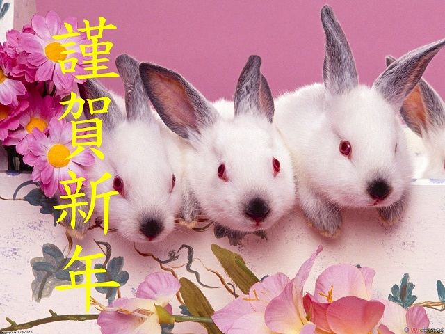 four_rabbit_1600x1200.jpg