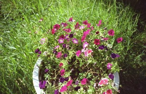 鉢植えの花B