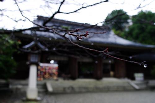 雨の吉野神宮