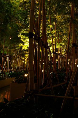 都会の竹林A