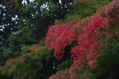 吉野神宮の紅葉2