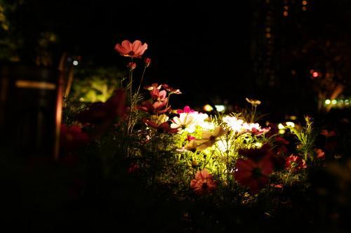 夜の花壇A
