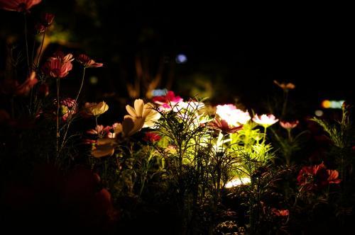 夜の花壇B