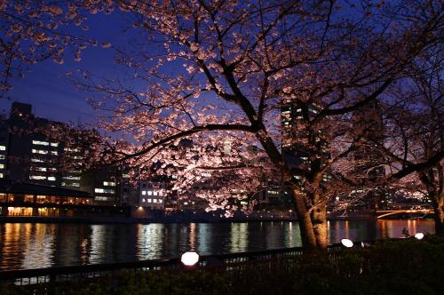 3月30日の夜桜1
