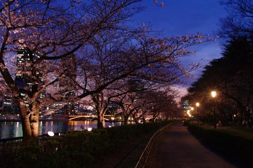3月30日の夜桜2