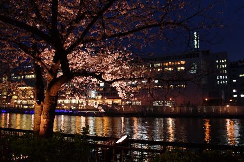 3月30日の夜桜3