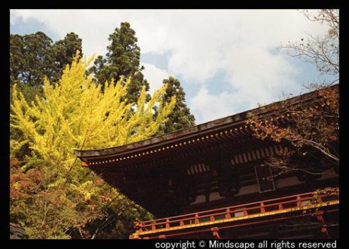 山門の黄葉