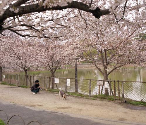 桜の前で記念撮影