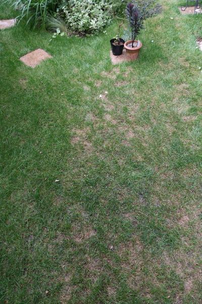 芝庭の状態