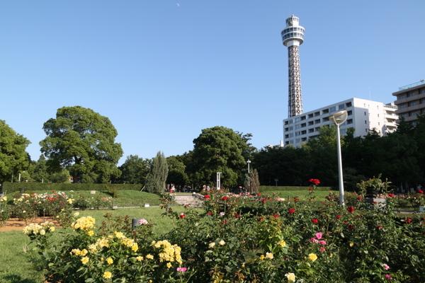 山下公園のバラ園3