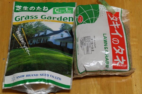 西洋芝の種1