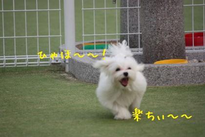 IMG_1622-1.jpg