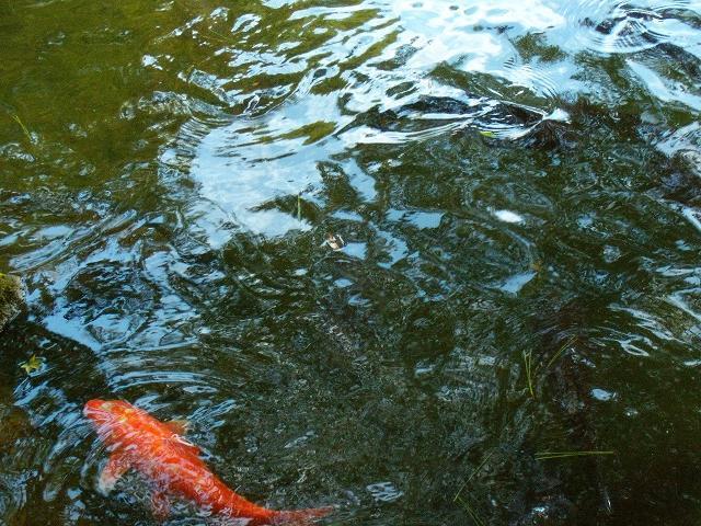 兼六園 池2