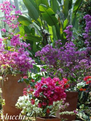 亜熱帯植物園10