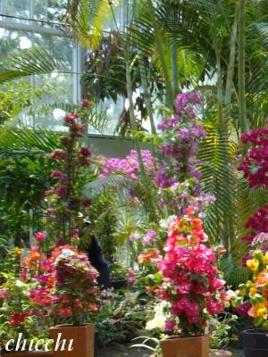 亜熱帯植物園11