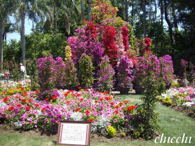 亜熱帯植物園3