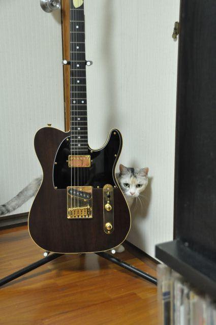 猫とギター2