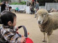 羊さんこんにちは