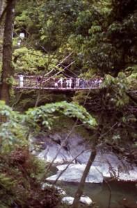 かずら橋1