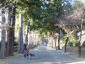 門からの道