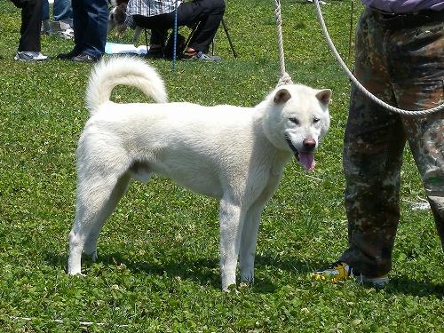 紀州犬さん