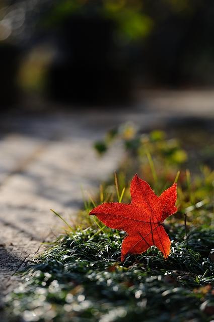 秋の忘れもの。