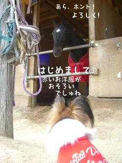 091016horse5