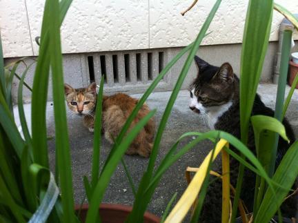 cat_031.jpg
