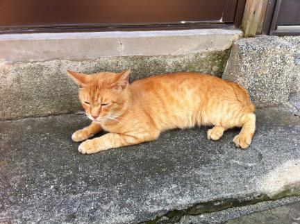 cat_032.jpg