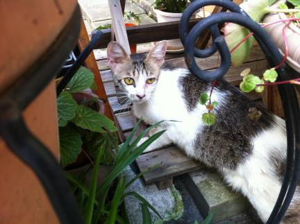 cat_033.jpg