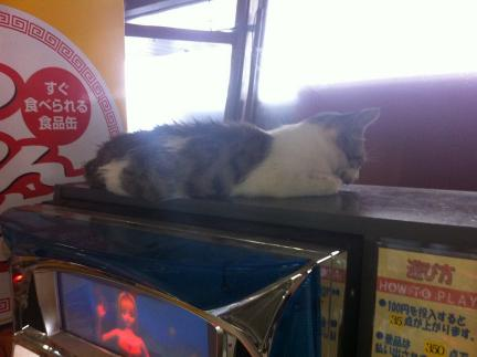 cat_035.jpg
