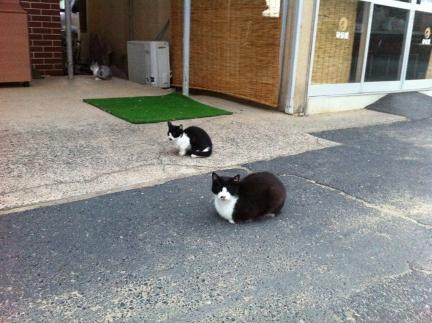 cat_039.jpg