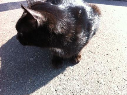 cat_040.jpg