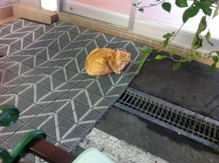 cat_042.jpg