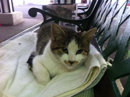 cat_043.jpg