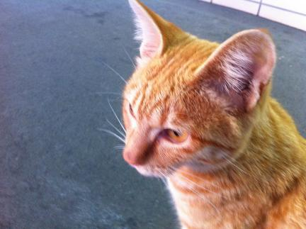 cat_045.jpg