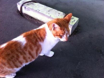 cat_046.jpg