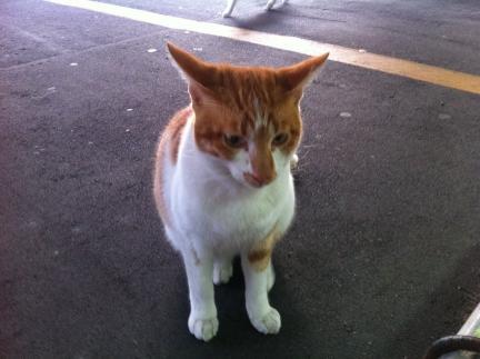 cat_047.jpg