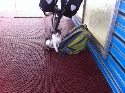 cat_048.jpg