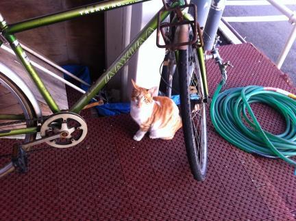 cat_050.jpg