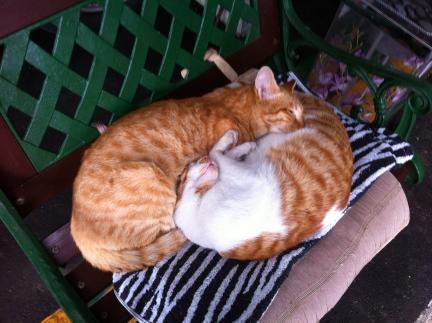 cat_051.jpg