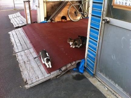 cat_054.jpg