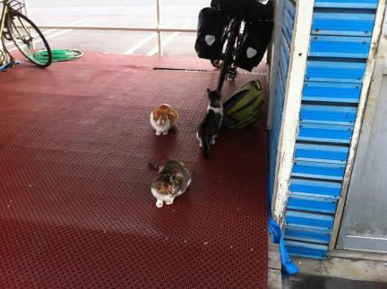 cat_055.jpg
