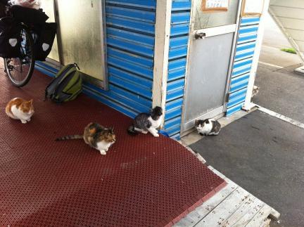 cat_056.jpg