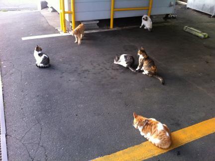 cat_057.jpg