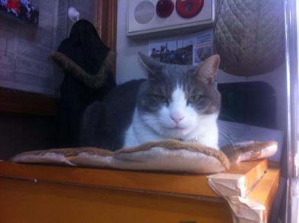 cat_061.jpg