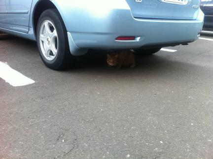 cat_062.jpg