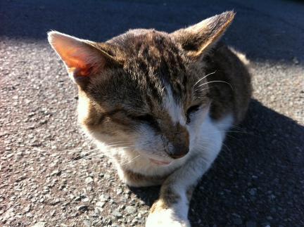 cat_063.jpg