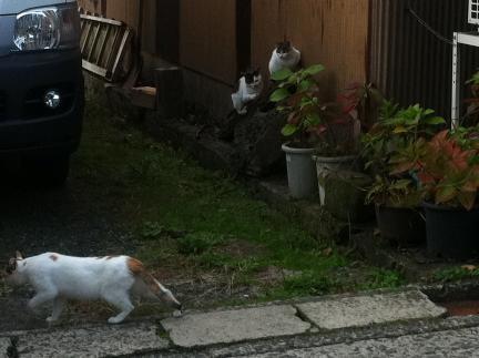 cat_064.jpg